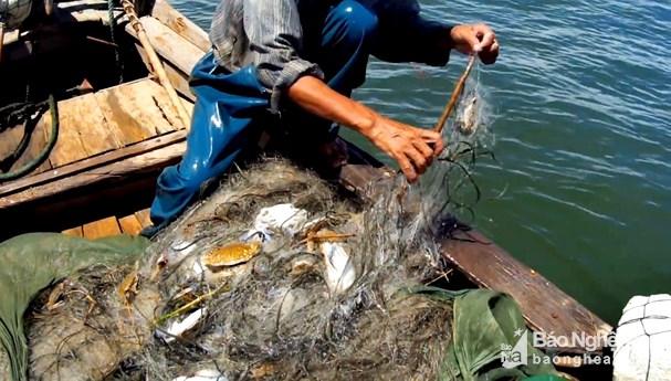 Đánh lưới ghẹ gần bờ, ngư dân Nghệ An thu tiền triệu mỗi ngày Ảnh 4