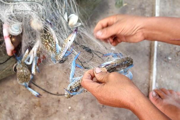 Đánh lưới ghẹ gần bờ, ngư dân Nghệ An thu tiền triệu mỗi ngày Ảnh 3