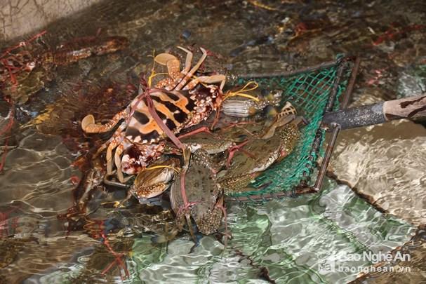 Đánh lưới ghẹ gần bờ, ngư dân Nghệ An thu tiền triệu mỗi ngày Ảnh 5