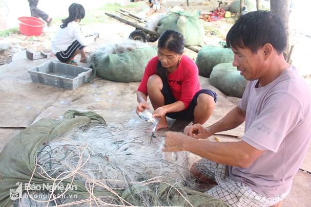 Đánh lưới ghẹ gần bờ, ngư dân Nghệ An thu tiền triệu mỗi ngày Ảnh 2