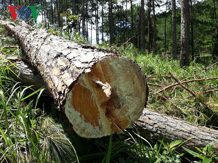 Lâm Đồng chỉ đạo tiếp tục kiểm tra, xử lý các vụ phá rừng Ảnh 1