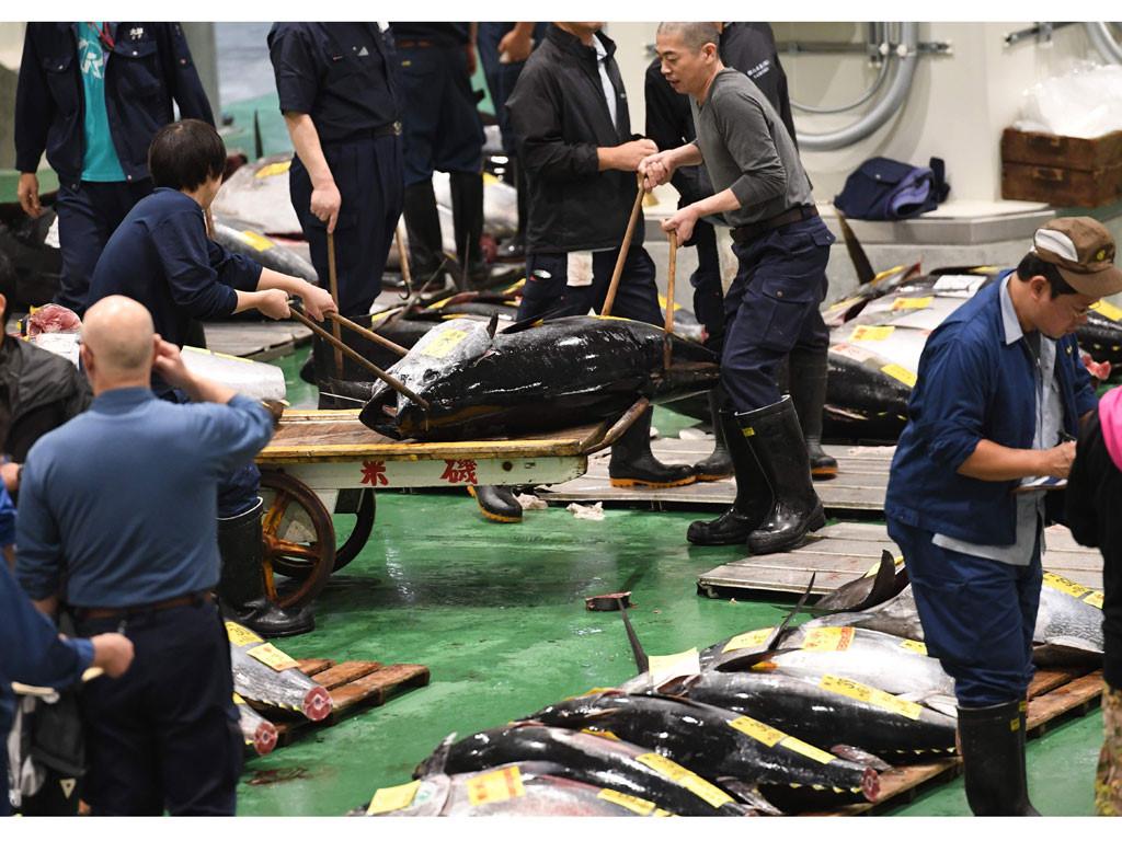 Chợ cá lớn nhất thế giới mở lại Ảnh 1