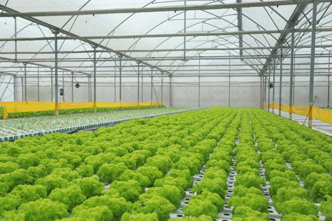 Nông dân xuất sắc hào hứng khi thăm thiên đường rau sạch VinEco Ảnh 9