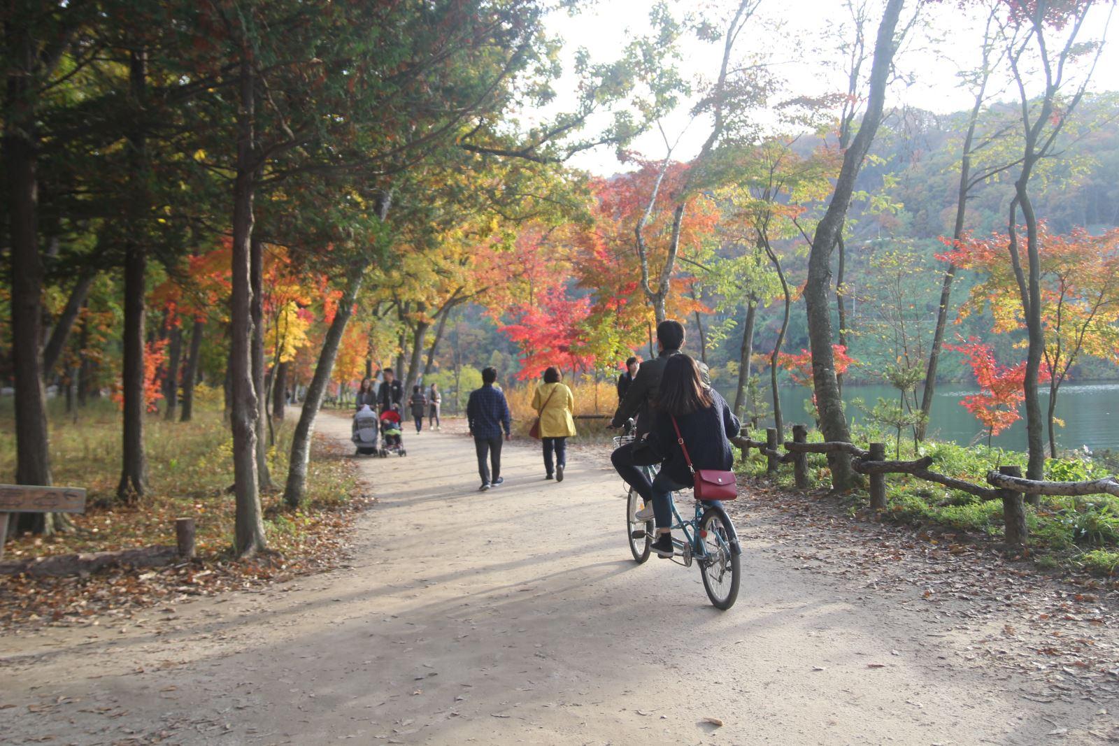 Lá vàng, lá đỏ vào đợt đẹp nhất mùa thu xứ Hàn Ảnh 10
