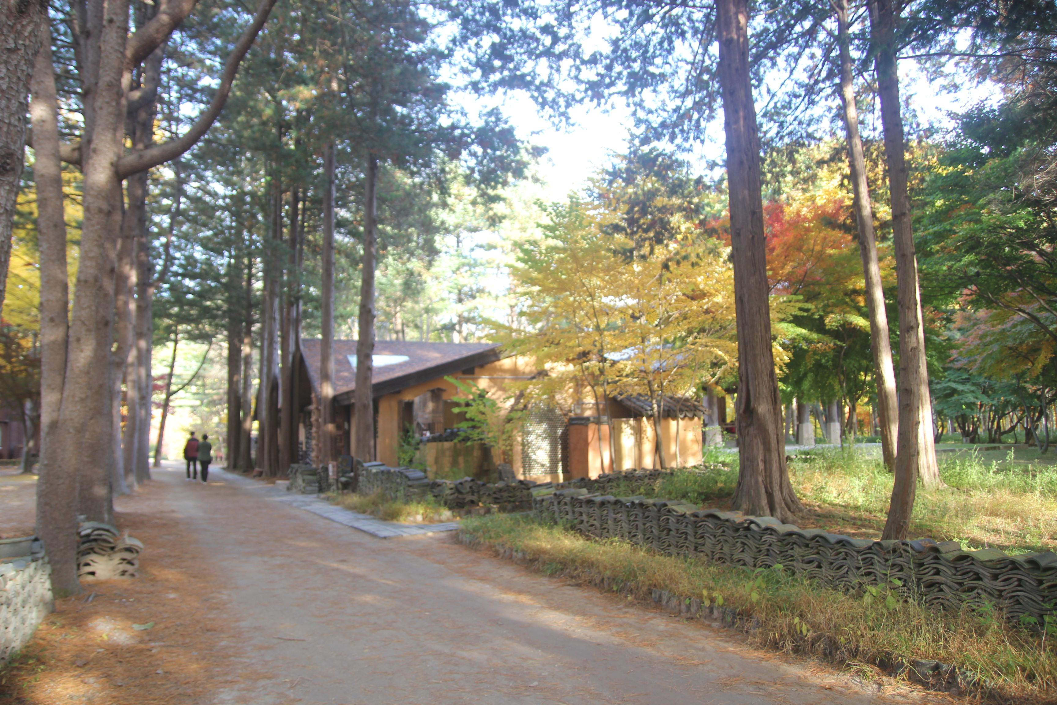 Lá vàng, lá đỏ vào đợt đẹp nhất mùa thu xứ Hàn Ảnh 8