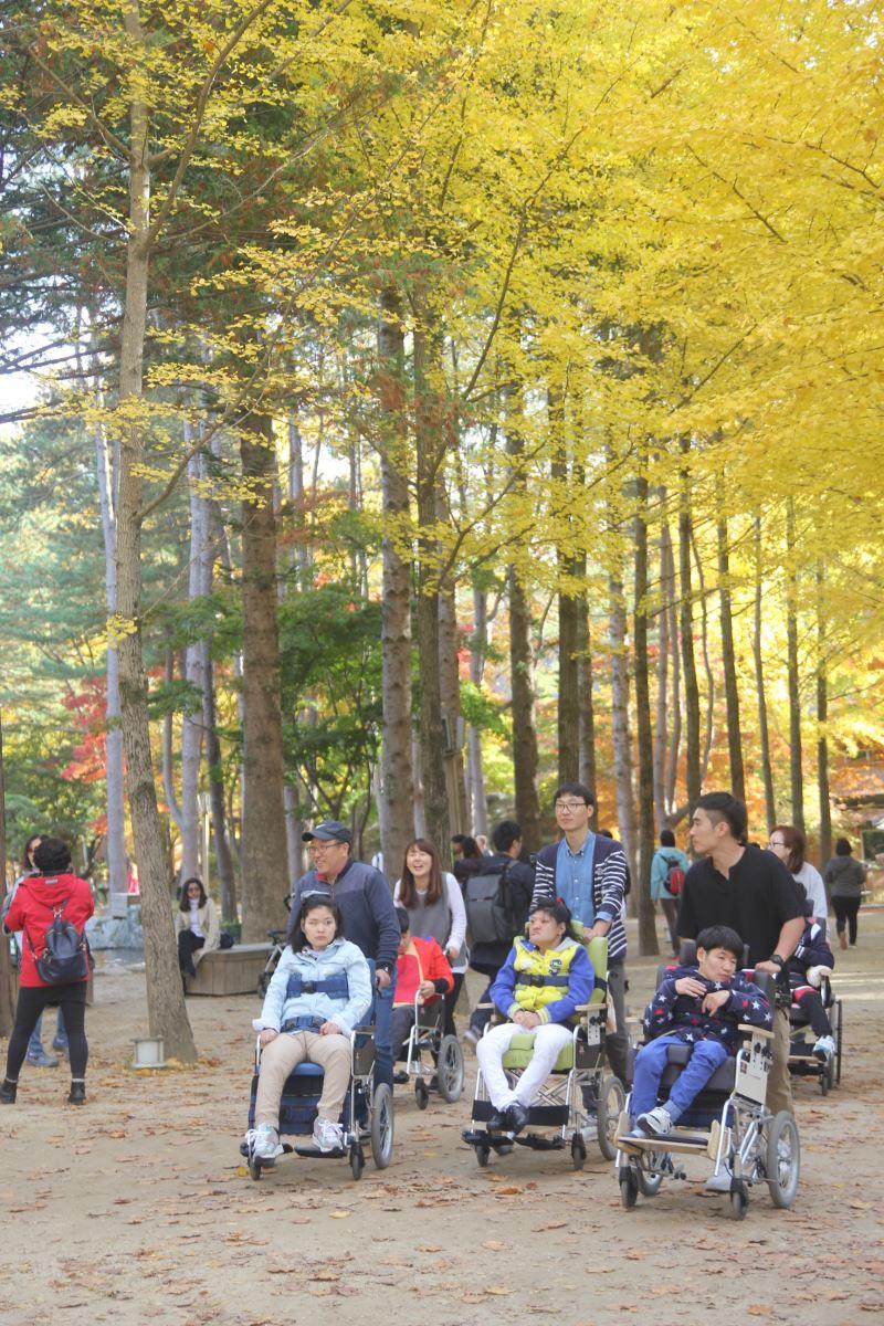 Lá vàng, lá đỏ vào đợt đẹp nhất mùa thu xứ Hàn Ảnh 7