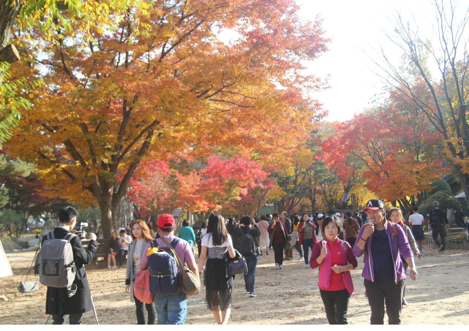 Lá vàng, lá đỏ vào đợt đẹp nhất mùa thu xứ Hàn Ảnh 3