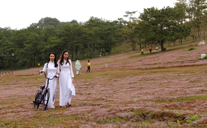 Lâm Đồng: Sắp diễn ra Mùa hội cỏ hồng năm 2018 Ảnh 1