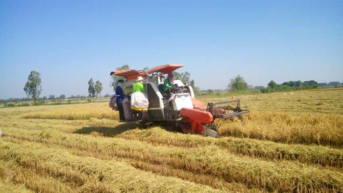 Bộ Công Thương: Thị phần gỗ Việt Nam giảm tại thị trường EU ảnh 1