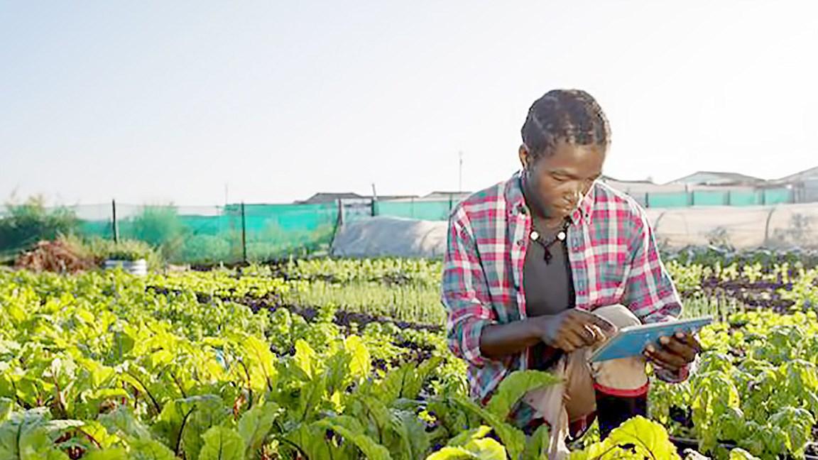 Nông dân châu Phi thời 4.0 Ảnh 1