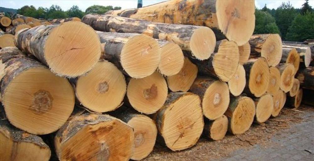 Ngừng tạm nhập, tái xuất gỗ rừng tự nhiên từ Lào và Campuchia Ảnh 1
