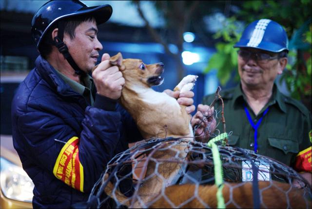 Trăn trở của người 'săn' chó thả rông chuyên nghiệp tại Hà Nội Ảnh 1