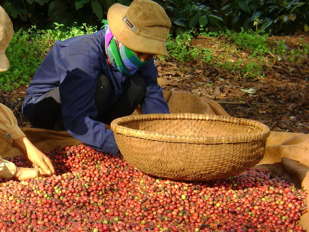 Nông sản ngày 5/12: Cà phê sụt giá về mức thấp nhất trong hơn 1 tháng qua Ảnh 1