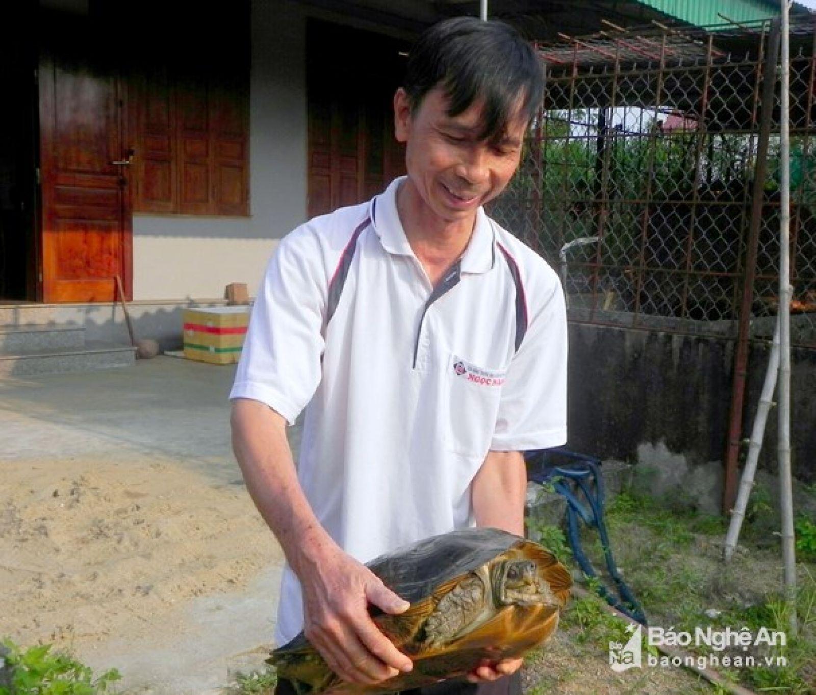 Nuôi lổm ngổm loài rùa to lụ khụ ở bể xi măng, bán 700 ngàn/con Ảnh 3