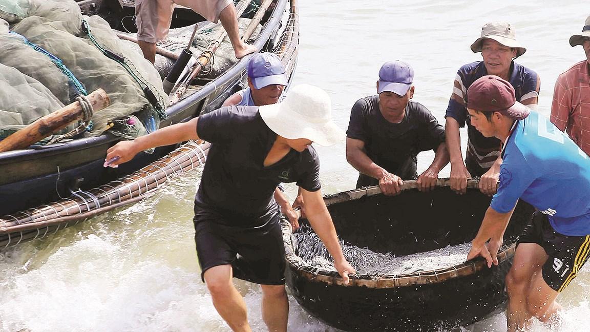 Ngư dân miền Trung trúng đậm 'lộc biển' Ảnh 1