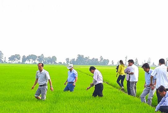 Đầu năm, lãnh đạo tỉnh An Giang lội ruộng thăm đồng cùng nông dân Ảnh 1