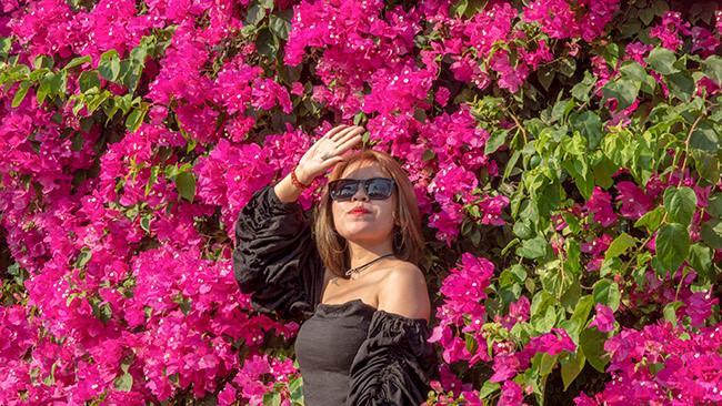Chiêm ngưỡng 'cụ' hoa giấy trăm triệu ở đảo Lý Sơn Ảnh 4