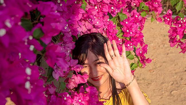 Chiêm ngưỡng 'cụ' hoa giấy trăm triệu ở đảo Lý Sơn Ảnh 3