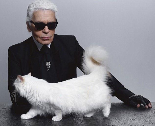 Mèo cưng thừa hưởng tài sản 200 triệu USD sau khi Karl Lagerfeld mất? Ảnh 2