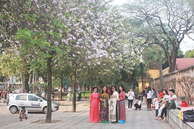 Ngắm hoa ban khoe sắc khắp phố phường Hà Nội Ảnh 8