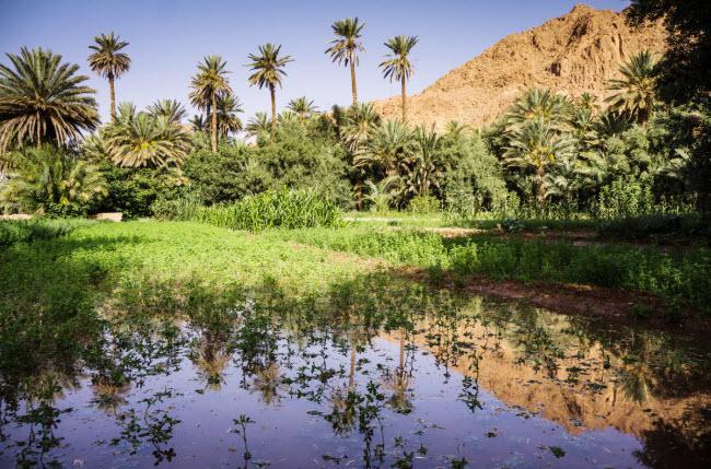 Không ngờ những ốc đảo thiên đường này lại mọc ngay giữa sa mạc Ảnh 3