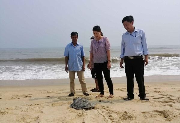 Thừa Thiên- Huế: Thả cá thể rùa quý hiếm nặng hơn 9kg về với biển Ảnh 1