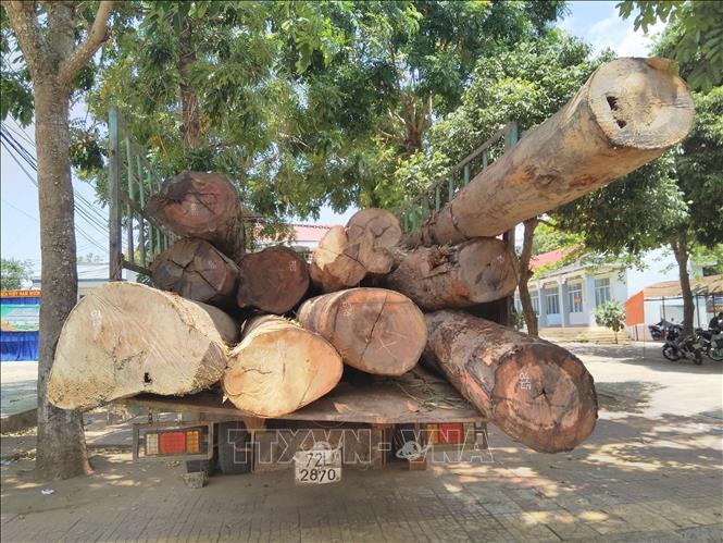 Bắt giữ vụ vận chuyển hơn 11m3 gỗ không rõ nguồn gốc Ảnh 1