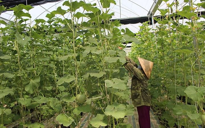 Bắc Cạn phát triển sản xuất nông nghiệp hàng hóa Ảnh 1
