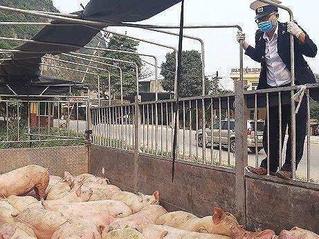 Ba xã đầu tiên ở Thanh Hóa công bố hết dịch tả lợn Châu Phi ảnh 1