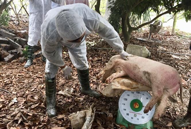 Đề xuất cấp đông hàng triệu tấn thịt lợn để dự trữ đối phó dịch tả lợn Ảnh 1