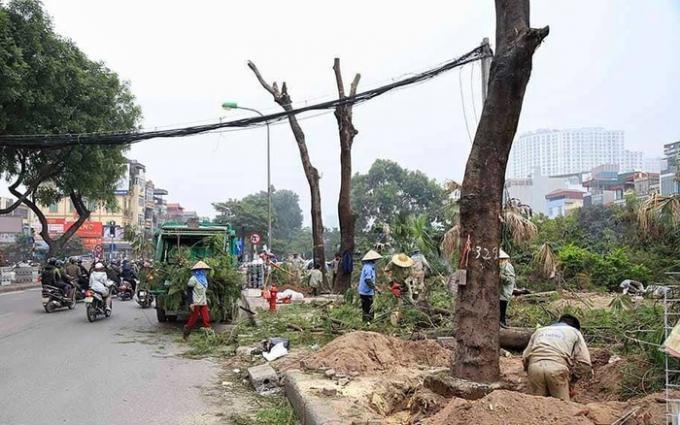 Hà Nội: Di chuyển 1.900 cây xanh để mở rộng 15 tuyến đường Ảnh 1
