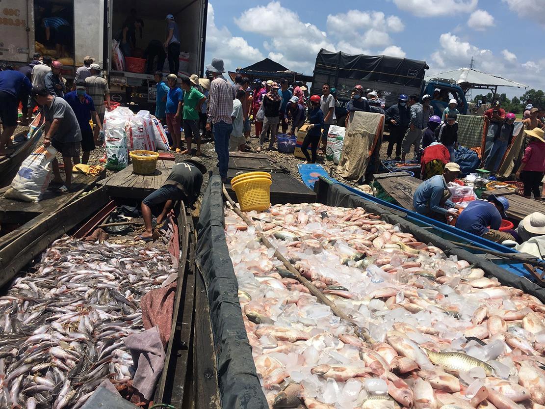 Hàng trăm tấn cá chết trắng ở Đồng Nai Ảnh 1