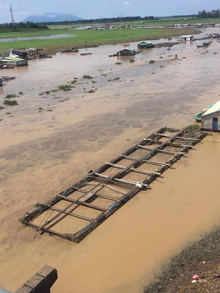 Cá nuôi bè trên sông La Ngà chết hàng loạt Ảnh 2