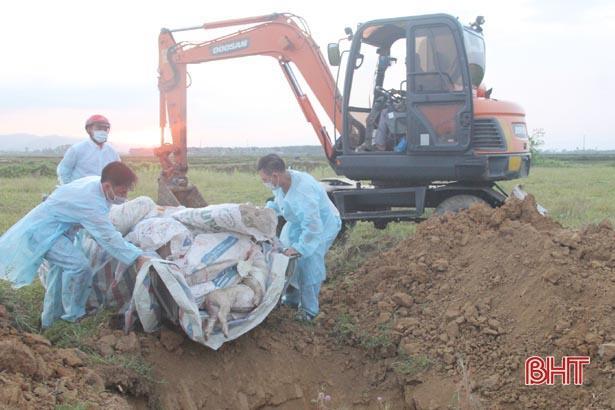 Hà Tĩnh tiêu hủy thêm 26 con lợn bị bệnh dịch tả châu Phi Ảnh 1