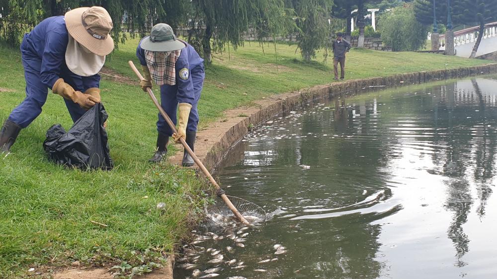 Cá chết bốc mùi hôi thối nổi đầy hồ ở TP Bảo Lộc, Lâm Đồng Ảnh 2