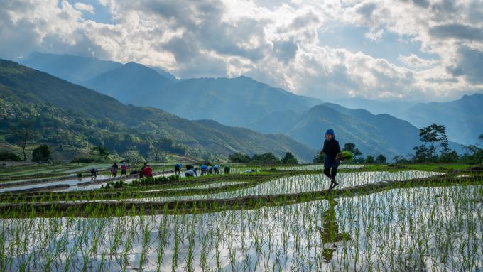 Mùa nước đổ đẹp như tranh ở Lào Cai Ảnh 5