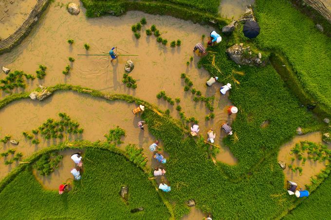 Mùa nước đổ đẹp như tranh ở Lào Cai Ảnh 4