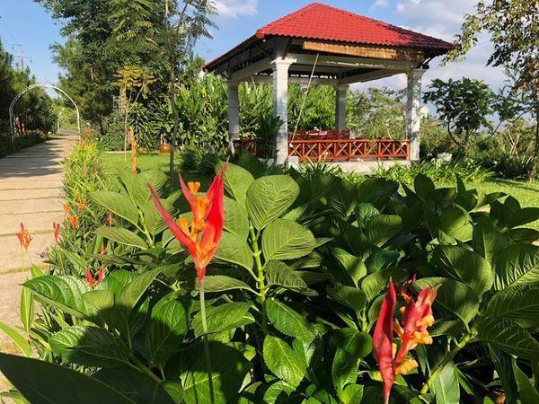 Lạc vào khuôn viên xanh mướt của Đại học Tôn Đức Thắng cơ sở Bảo Lộc, quanh năm hoa đua nở khoe sắc Ảnh 14