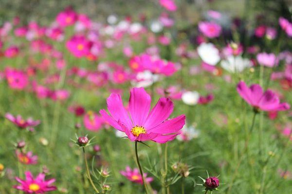 Lạc vào khuôn viên xanh mướt của Đại học Tôn Đức Thắng cơ sở Bảo Lộc, quanh năm hoa đua nở khoe sắc Ảnh 5