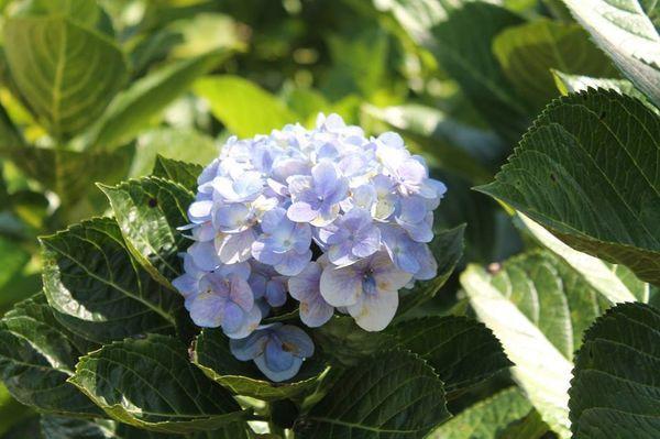 Lạc vào khuôn viên xanh mướt của Đại học Tôn Đức Thắng cơ sở Bảo Lộc, quanh năm hoa đua nở khoe sắc Ảnh 12