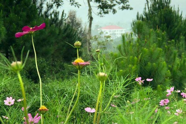 Lạc vào khuôn viên xanh mướt của Đại học Tôn Đức Thắng cơ sở Bảo Lộc, quanh năm hoa đua nở khoe sắc Ảnh 13