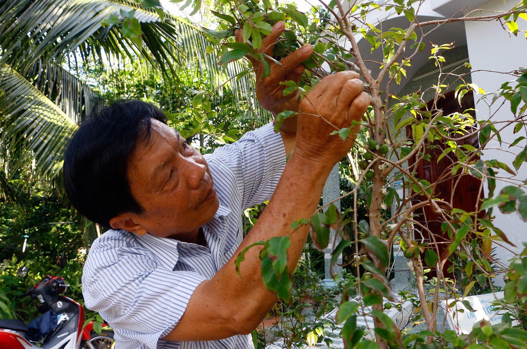 Chiêm ngưỡng vườn nho thân gỗ độc đáo ở xứ Cù Lao Ảnh 6