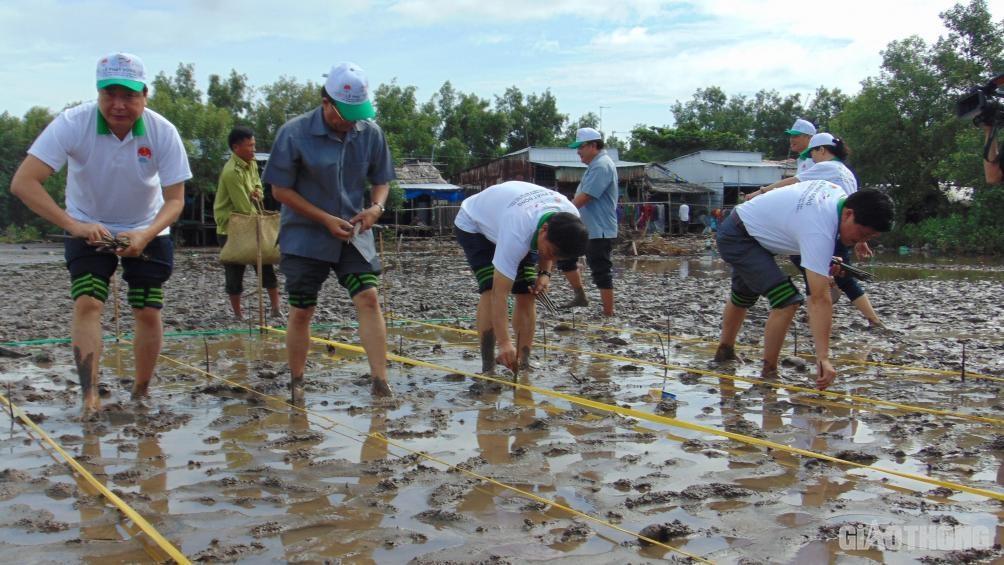 Hơn 500 người tham gia phát động trồng rừng ngập mặn ở ĐBSCL Ảnh 3