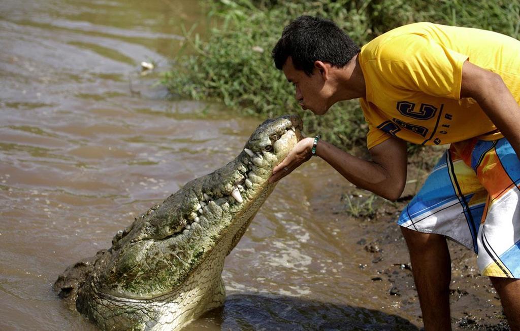 Nụ hôn cá sấu và súng chống drone vào top ảnh tuần Ảnh 1