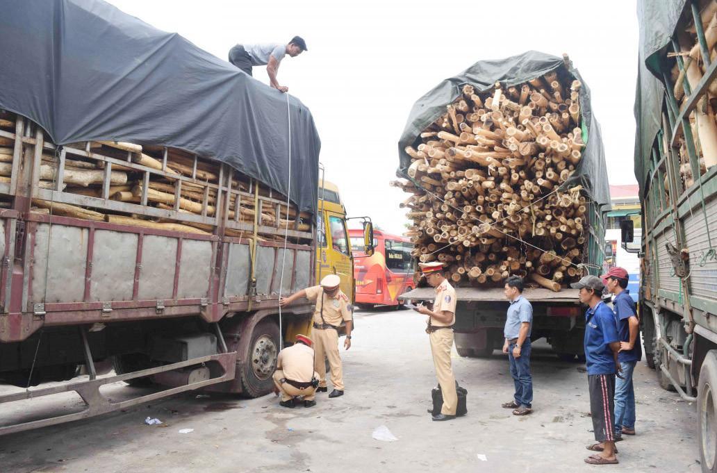 Huế: Hàng trăm xe tải chở keo, tràm... quá khổ, xử phạt hơn 4 tỷ đồng Ảnh 1