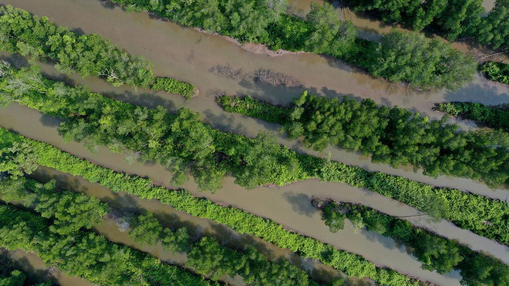 Đất mũi Cà Mau xanh mướt từ từ flycam: Nơi đất biết nở, nơi rừng biết đi Ảnh 11