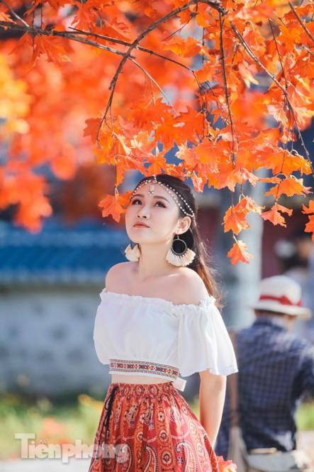 Ngỡ ngàng với con đường phong lá đỏ ở Hà Nội Ảnh 8