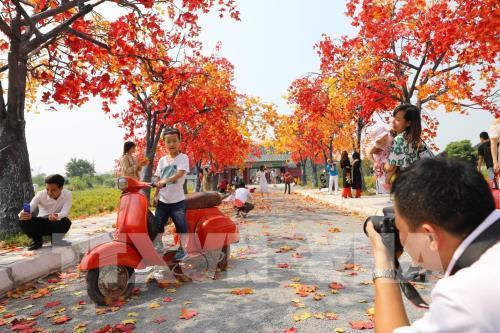 Giới trẻ Hà Nội háo hức với con đường phong lá đỏ như ở Hàn Quốc Ảnh 8