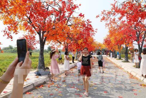 Giới trẻ Hà Nội háo hức với con đường phong lá đỏ như ở Hàn Quốc Ảnh 5