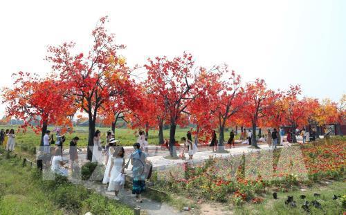 Giới trẻ Hà Nội háo hức với con đường phong lá đỏ như ở Hàn Quốc Ảnh 6